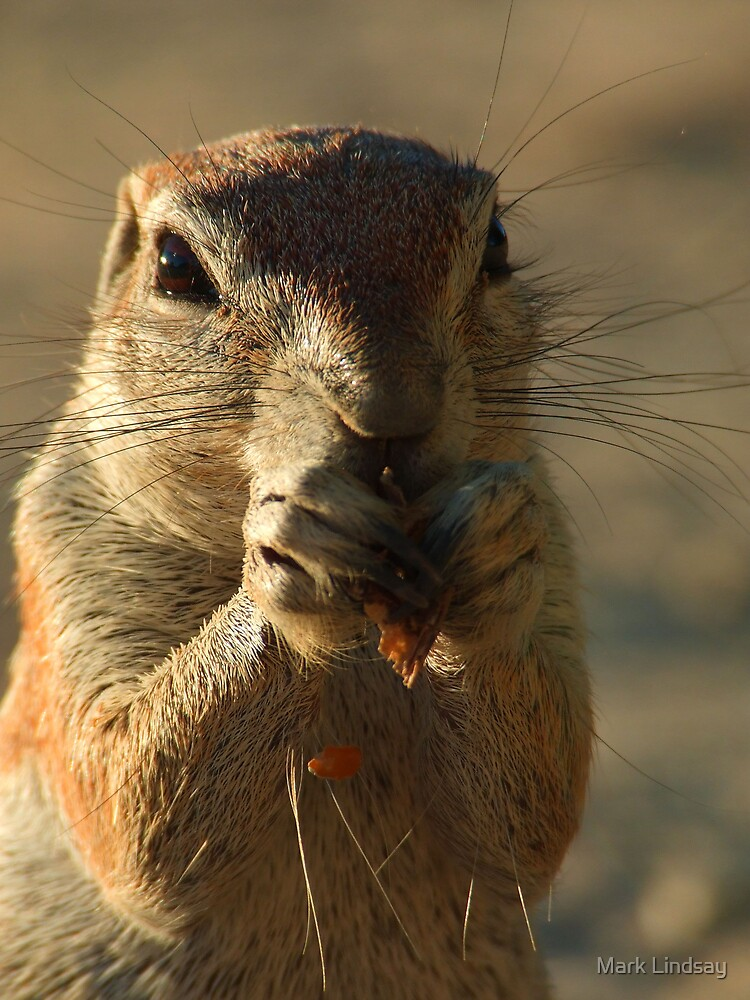 Ground squirrel  by Mark Lindsay