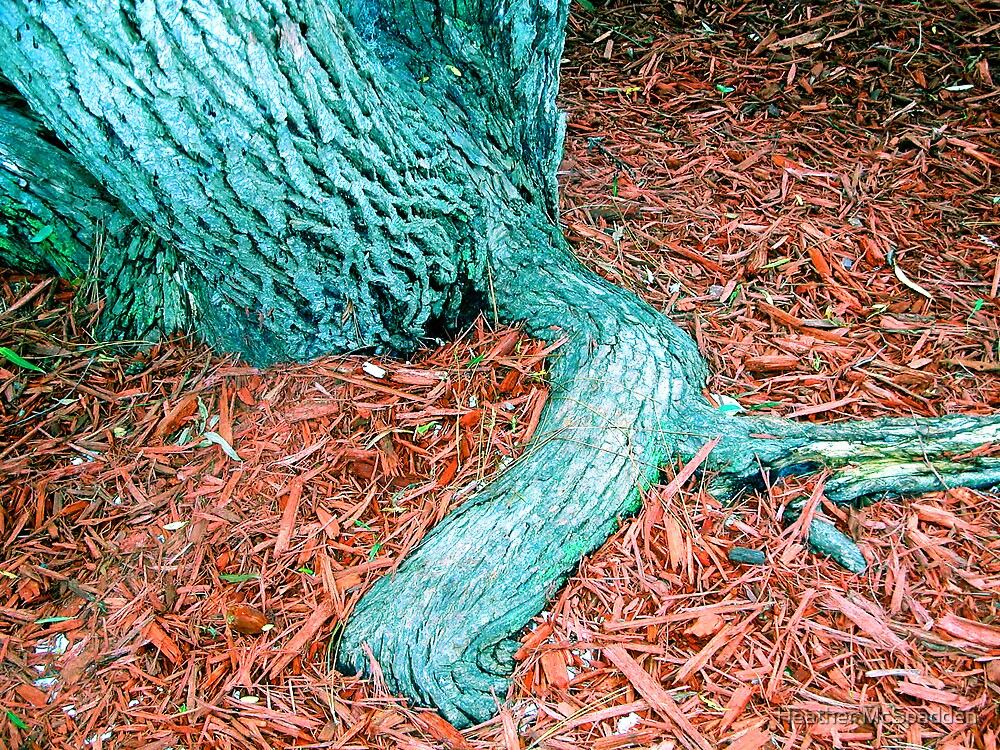 willow tree roots by Heather McSpadden