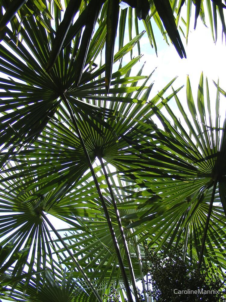 Summer Palm by CarolineMannix