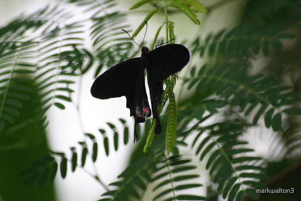 butterfly by markwalton3