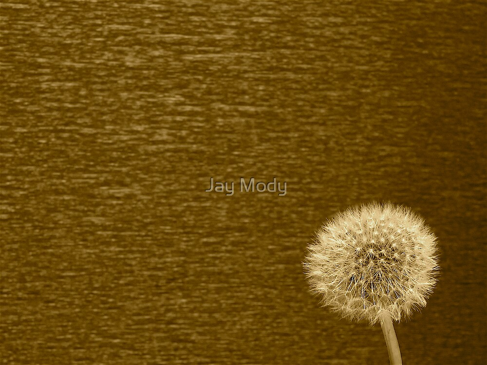 Dandelion Clock by Jay Mody