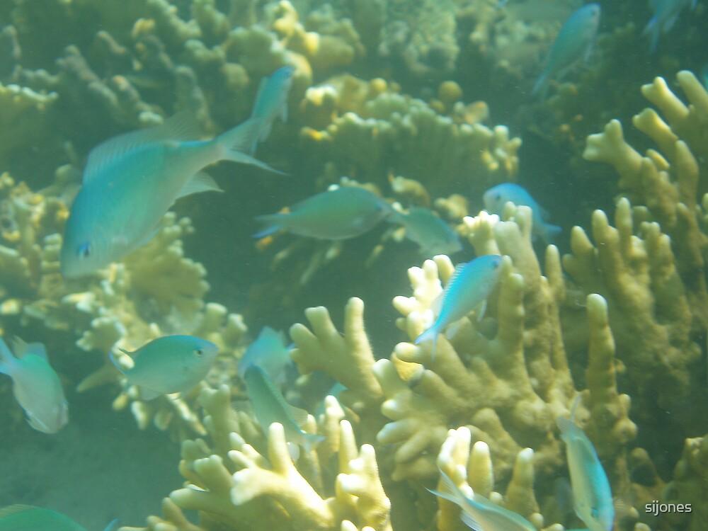 reef fish mombassa by sijones