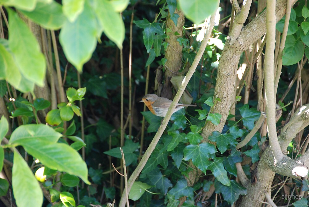 robin,gardener's friend by sijones