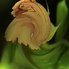 Whirling rose by spig