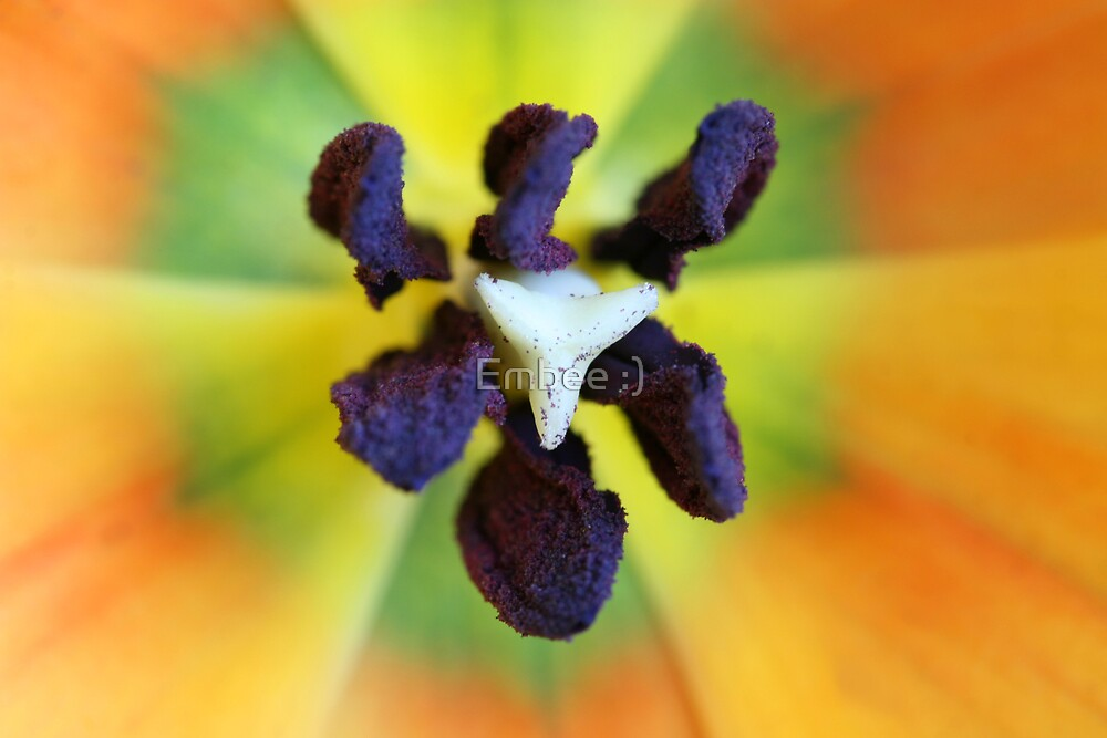 Heart of a tulip by momleeb