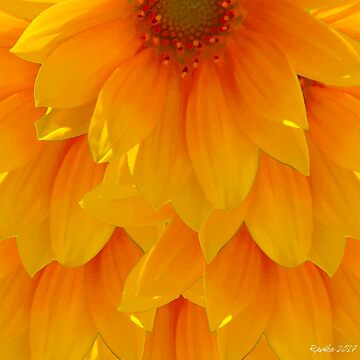 Sunflowers by radcarr