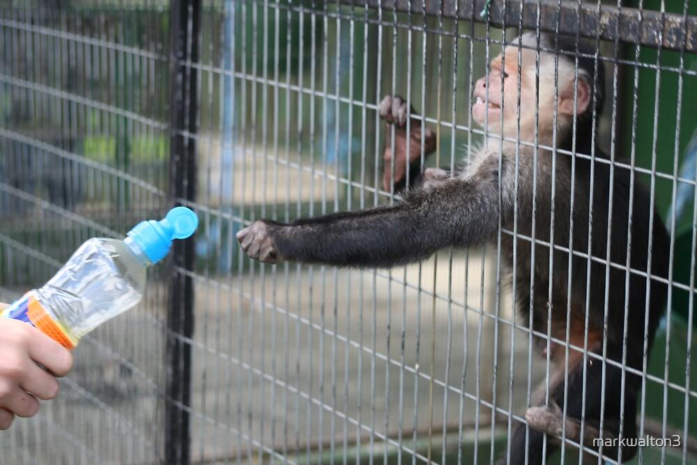 determined monkey by markwalton3
