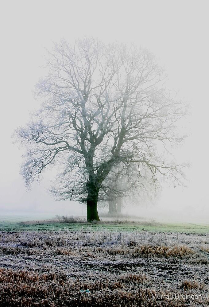 Icy fog by Murray Breingan
