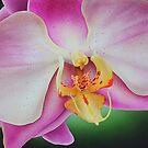 Orchid by jsalozzo