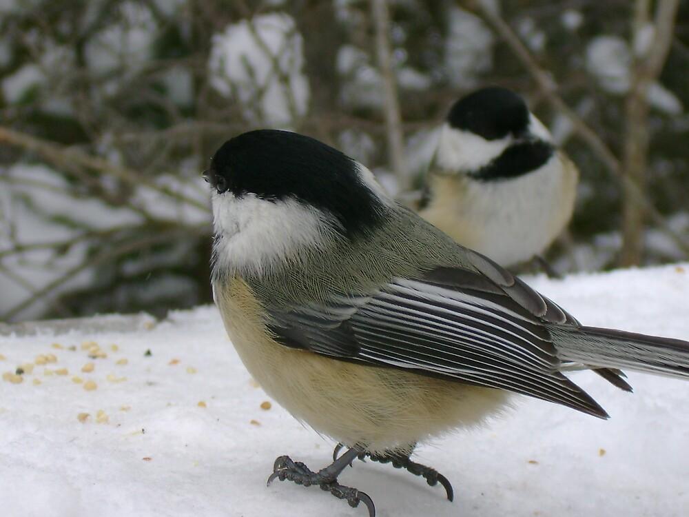 Chickadees by Robert Lake