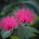 Bursting Pink by Bob Hardy