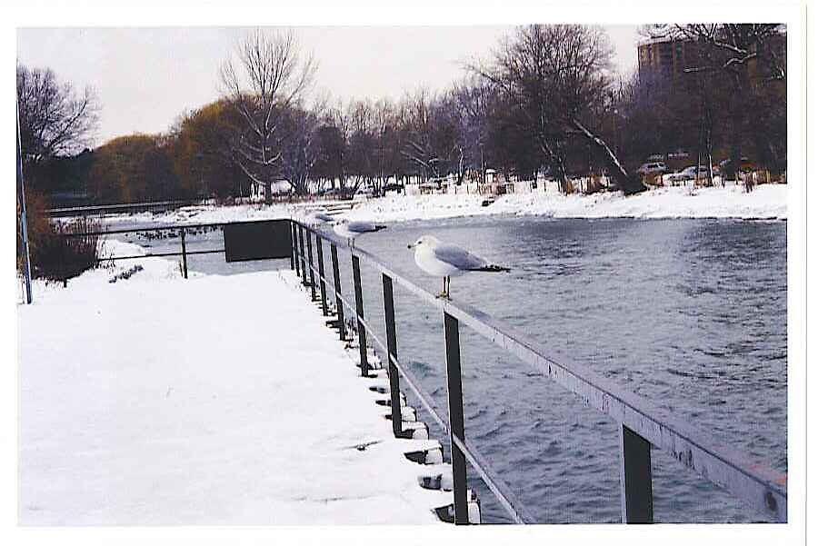 Birds at Lake Ontario by Robert Lake