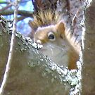 Squirl by Robert Lake
