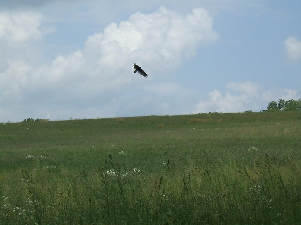 Vulture in Flight by joeybaggadonuts