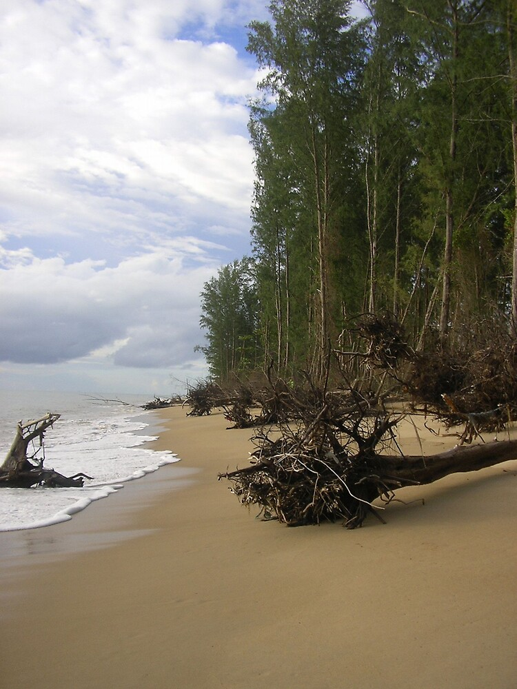 Fallen trees on thai beach by Amy Dawes