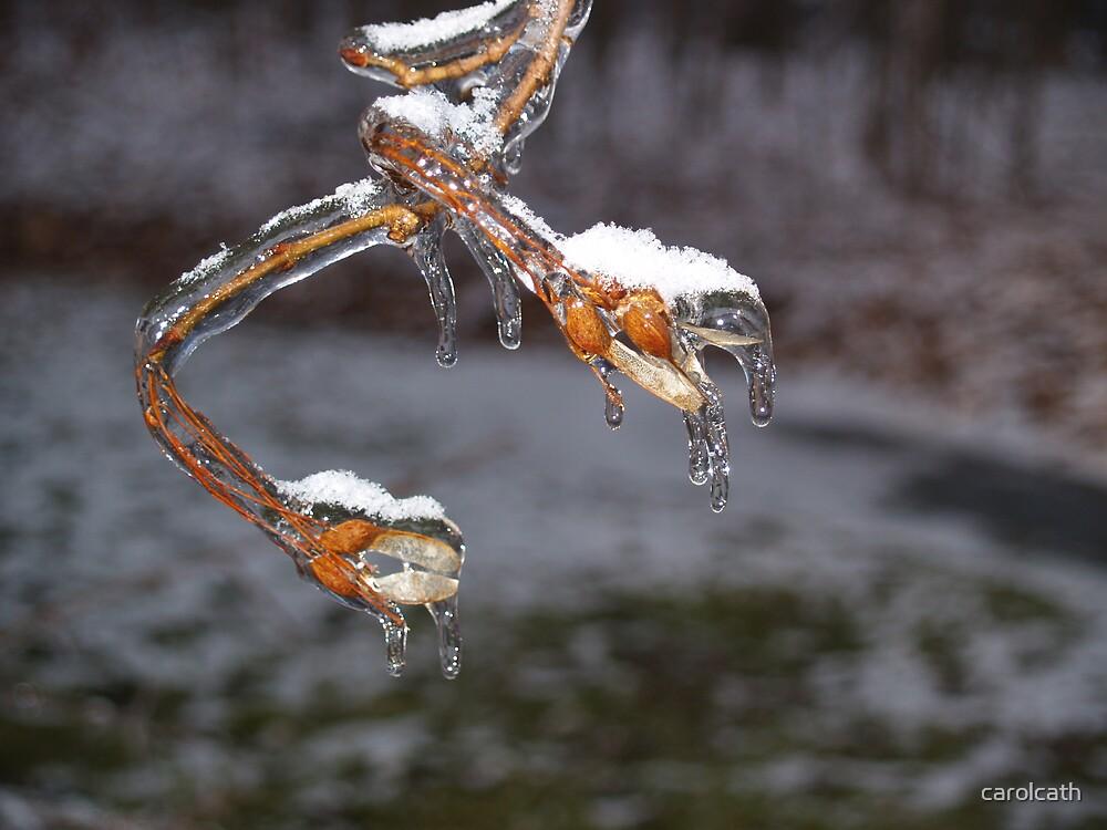 Ice Buds by carolcath