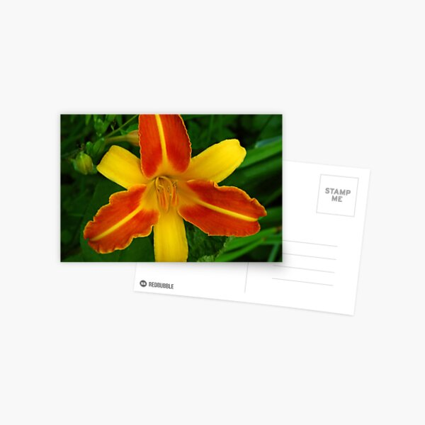 Lily in Orange and Yellow Postcard