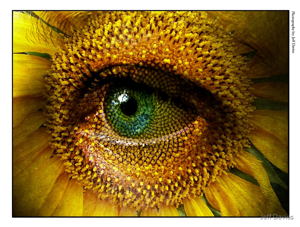 Sunflower with eye by Jeff Davies