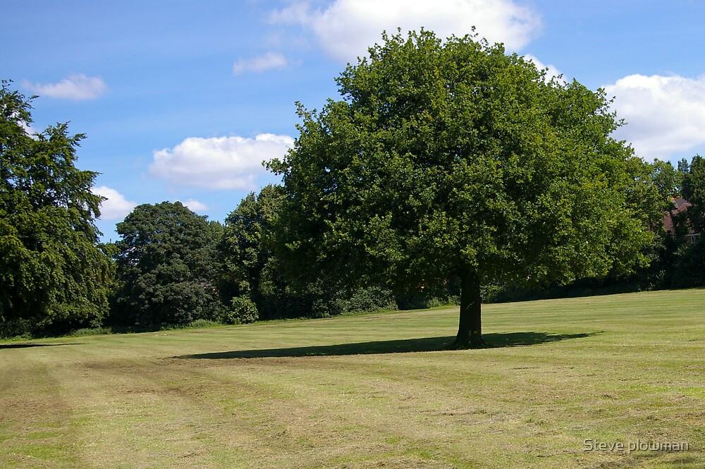 The tree by Steve plowman