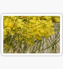 Golden Wattle Sticker