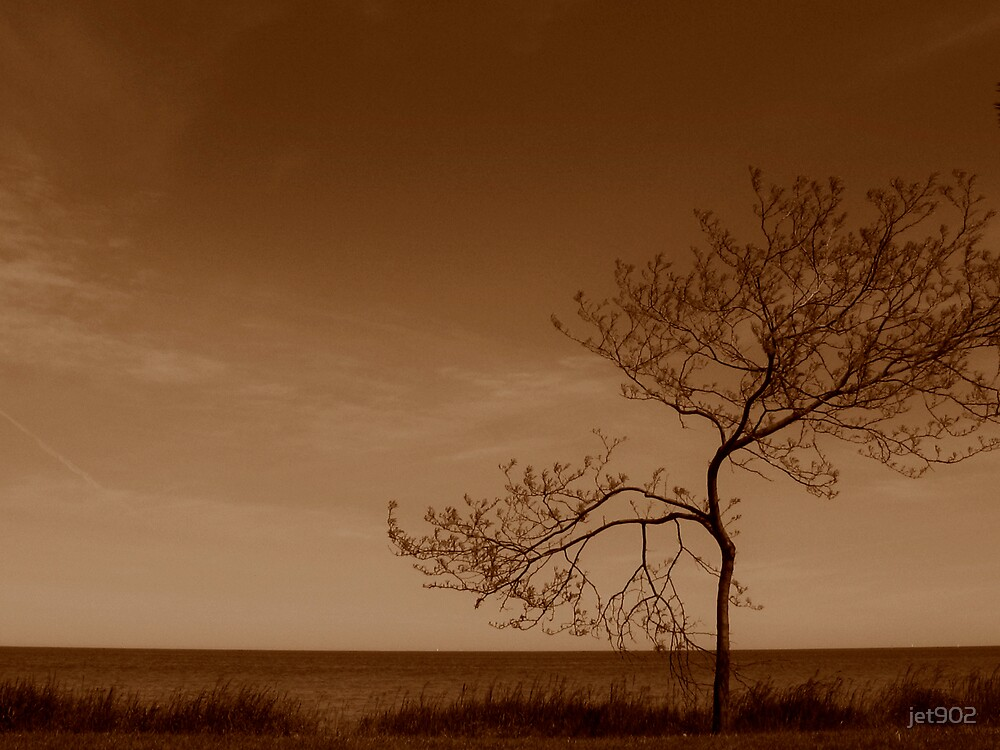 Tree by jet902