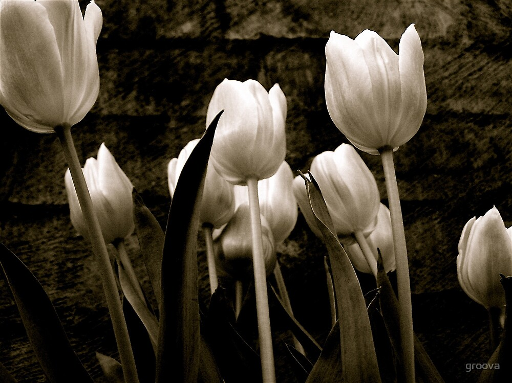 Antique Tulips by groova