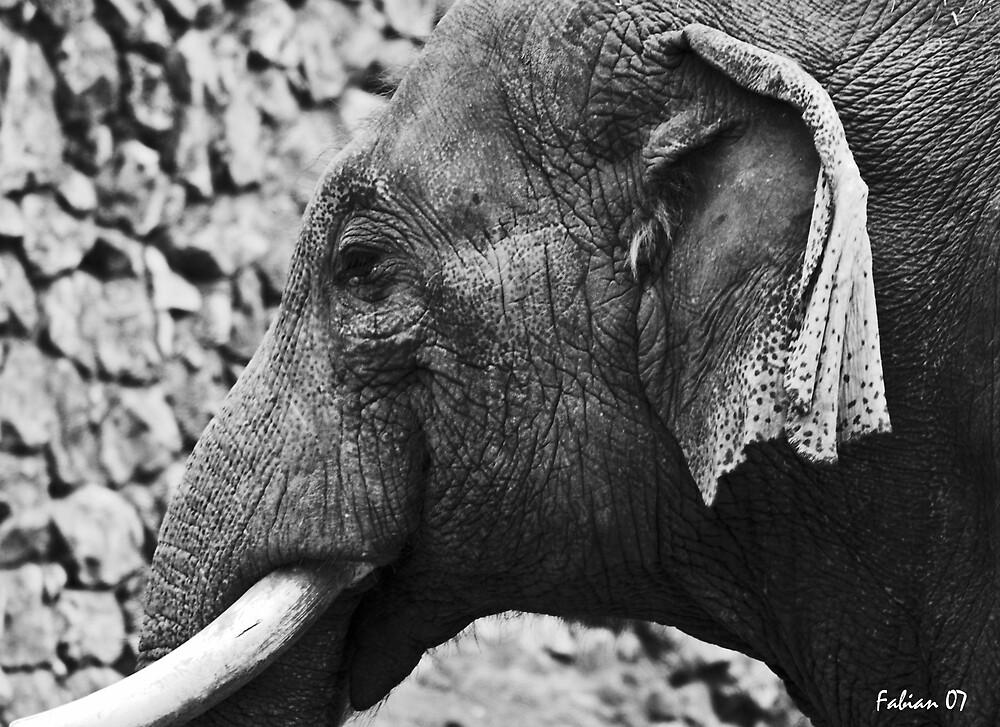 Elephant by photo77