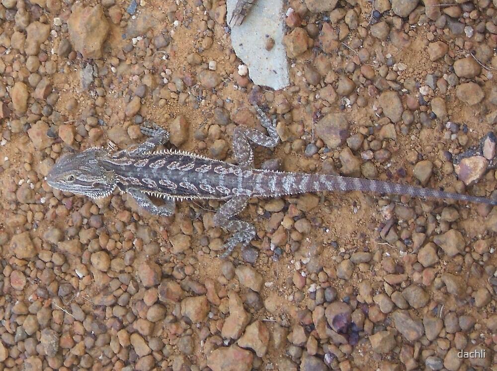 Frilly Lizard by dachli