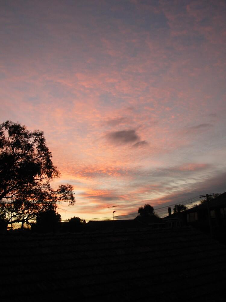 Australian Evening by Toast