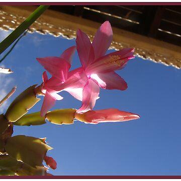 Sun Blossom by tazzae