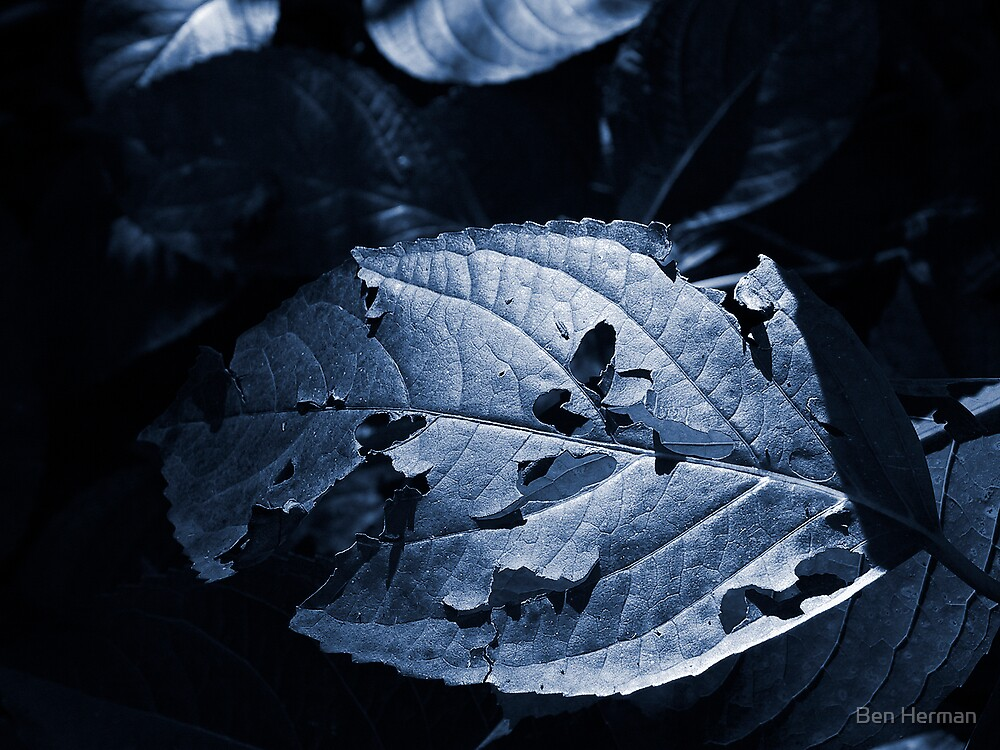 Leaf in Shade by Ben Herman