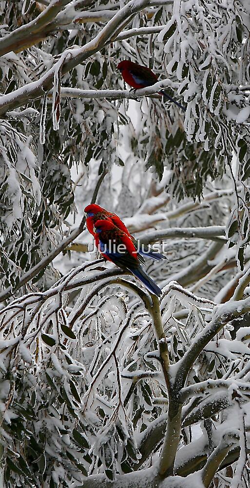 Snow Rosellas by Julie Just