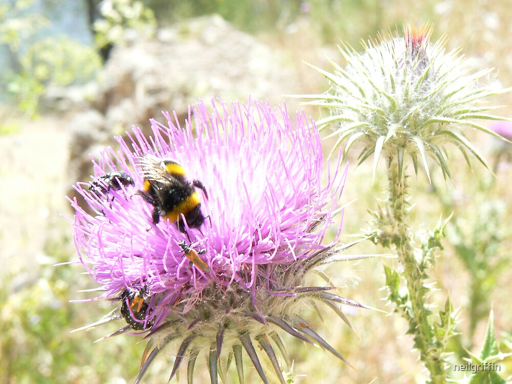 Insects at Delphi by neilgriffin