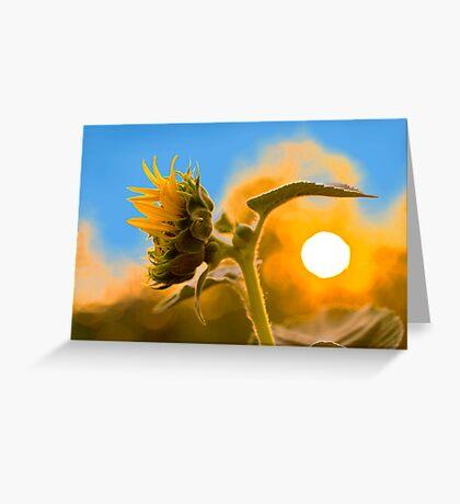 Sun(flower) rise Greeting Card