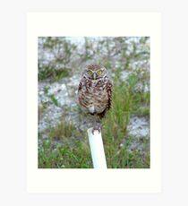 Borrowing Owl 4 Art Print