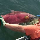 Kenai River King Salmon by 2bearz