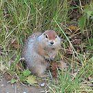Squirrel by 2bearz