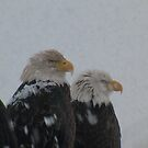 Snow Tolerant 2 by 2bearz