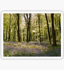 Blue-bells and Beechwood Sticker