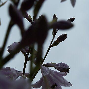 Flowers For Chelsea by djskastyle