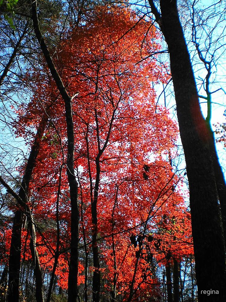 red maple  by regina