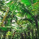 Tropical Canopy by Jonicool