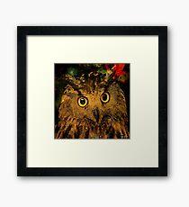 Owls Framed Print