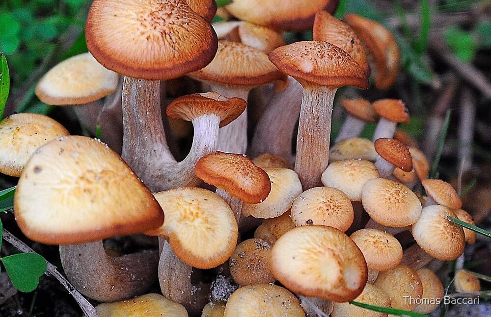 Mushroom Forest by TJ Baccari Photography
