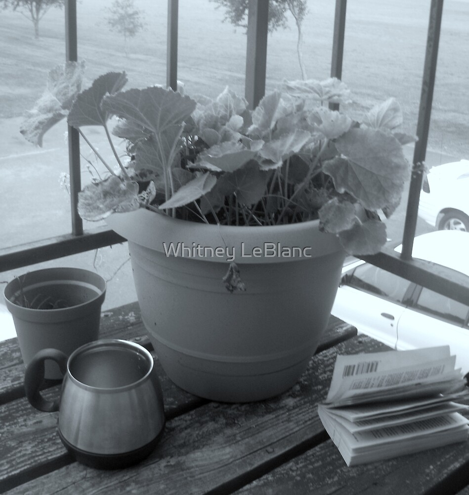 Flower Pot by Whitney LeBlanc