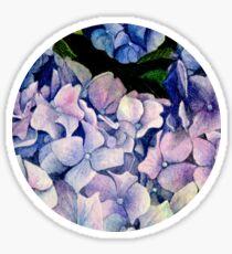 Watercolours - Hydrangea Sticker