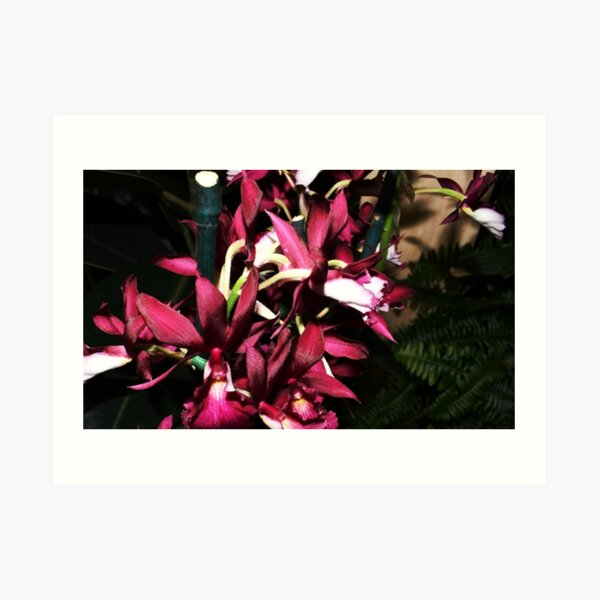 Orchid Show 16 Art Print
