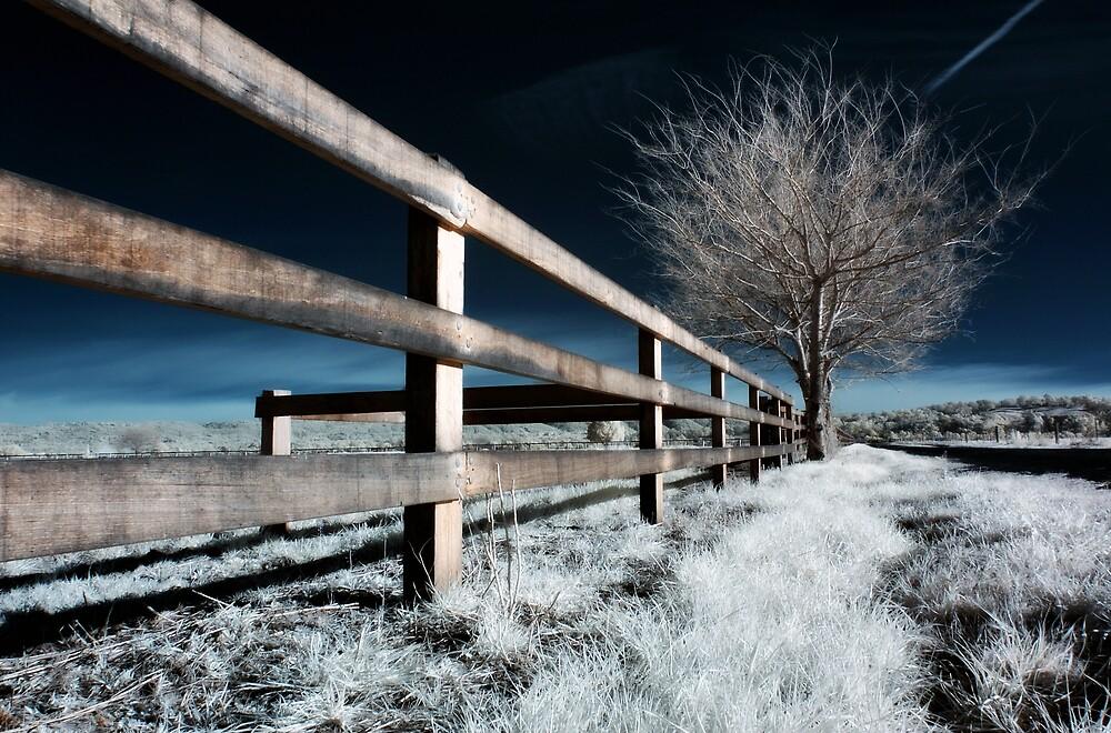 Winter at Richmond by Alex Lau