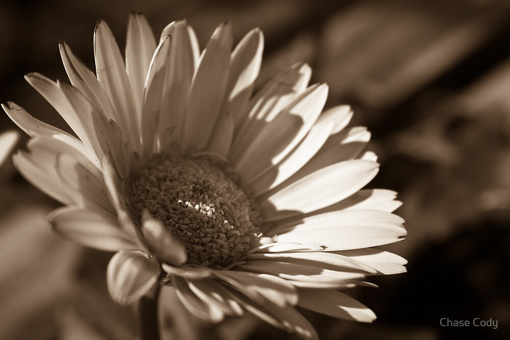 Sepia Flower by Chase Cody