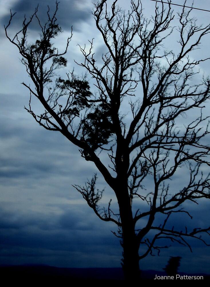 Storm Tree, Victoria, Australia by Joanne Patterson